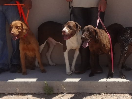 The Animal Service Center of the Mesilla Valley is seeking homes for 18 heartworm-positive dogs that will be euthanized if not adopted by July 15, 2016.
