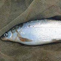 CWD, whitefish meetings on tap