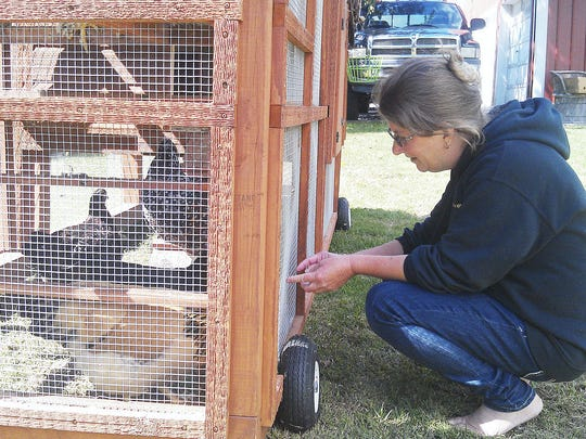 Michelle Voydik, a Richland Borough Councilwoman, kneels in front of a cage holding six chickens in her yard at xxxx St. She claims a dispute over the chickens was at the root of a decision by the borough's Beautification Committee to remove the borough's community tree which was planted 20 years ago in memory of her grandfather, former Richland mayor Martin Steiner. John Latimer-Lebanon Daily News