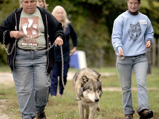 Renki, a male wolf, leads the first lap of the Walk for Wolves with curator Pat Goodmann, left, and Assistant Manager Dana Drenzek at Wolf Park  in Tippecanoe County.