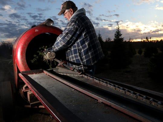 Ken Trzebiatowski, an employee, pulls a Christmas tree