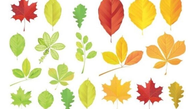 """Westport Art Group will offer an outdoor workshop for kids, """"Leaf Painting Pizzazz,"""" on Saturday, Oct. 17."""