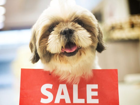 Dog with Sale Sign in a Pet Shop