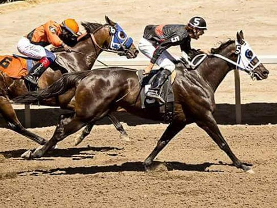 Shance Bird Rattler of Browning charges to the lead during the State Fair Race Meet last summer. The Bird Rattler family has long been involved in the horse racing industry in Montana.
