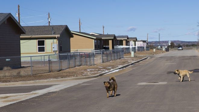 Dogs roam the streets of a development built by the Navajo Housing Authority in Ramah, N.M.