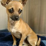 Pet of the day: Pewee