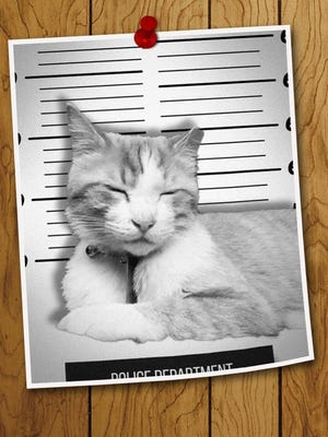 Pirate Cat didn't really get a mugshot, but if he did...