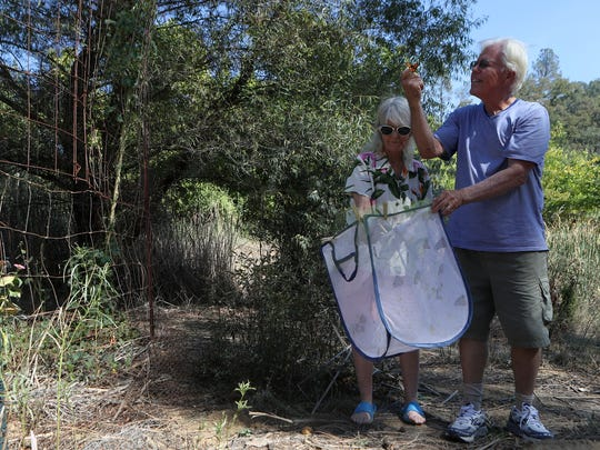 Larry and Bonnie Boisclaire release butterflies on their property in Bella Vista. The two raise caterpillars in their home and when they become butterflies they are released in a flower garden on their property. The couple have released around 1,000 butterflies this year.