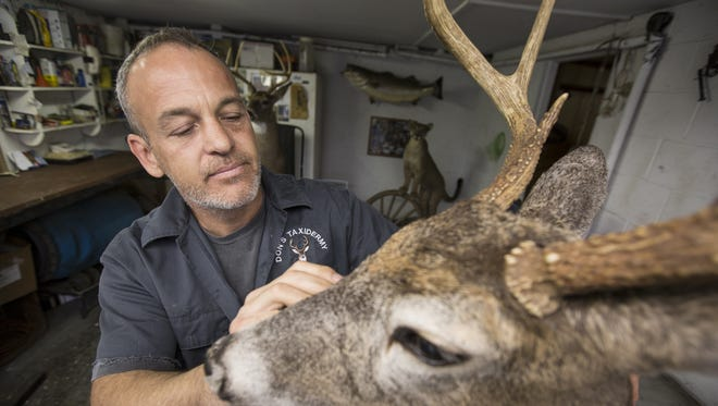 Don Hippler, 50, a taxidermist in Sloatsburg, performs finishing work on a deer mount for a client. Thursday, Nov. 5, 2015.