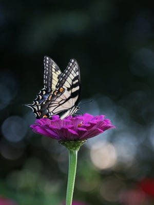 The butterfly release is a symbol for the soul-representing beauty, serenity, hope and peace.