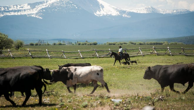 """China, along with more than a dozen other countries, shut its borders to American beef more than a decade ago when the United States found its first case of mad cow disease in December 2003 in Washington State. The communist nation has long been coveted by U.S. beef producers eager to have access again to the country's more than 1.3 billion consumers and burgeoning middle class.   A Chinese government official said earlier this week it would resume shipments """"soon"""" but did not provide more information.  Montana, the nation's 11th largest cattle producer, could be among the states to see increased demand for its beef following a decision by China to resume U.S. imports of the popular meat."""