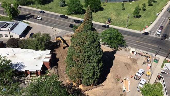 An aerial view shows heavy machinery used by workers as they pruned the roots, built a burlap, plywood and steel-pipe structure to contain the rootball so they can move the roughly 100-foot sequoia tree in Boise, Idaho, Thursday, June 22, 2017.