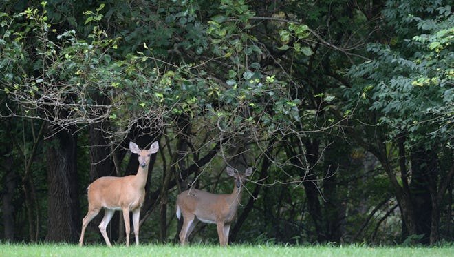 Two deer hunts are planned at Whitewater Memorial State Park this fall.