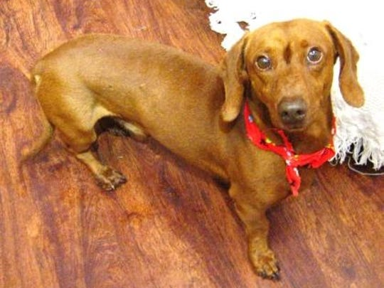 Are you looking for a nice companion?  The HSSLC has plenty of dogs to adopt. Come find yours.
