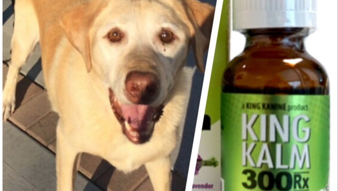 Teddy the yellow lab has been moving around better and feeling less pain after his owner, Thomas McDermott, began giving him this CBD oil extract.