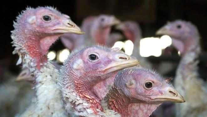 The bird flu outbreak has affected turkey and chicken farms in Wisconsin and across the Midwest.