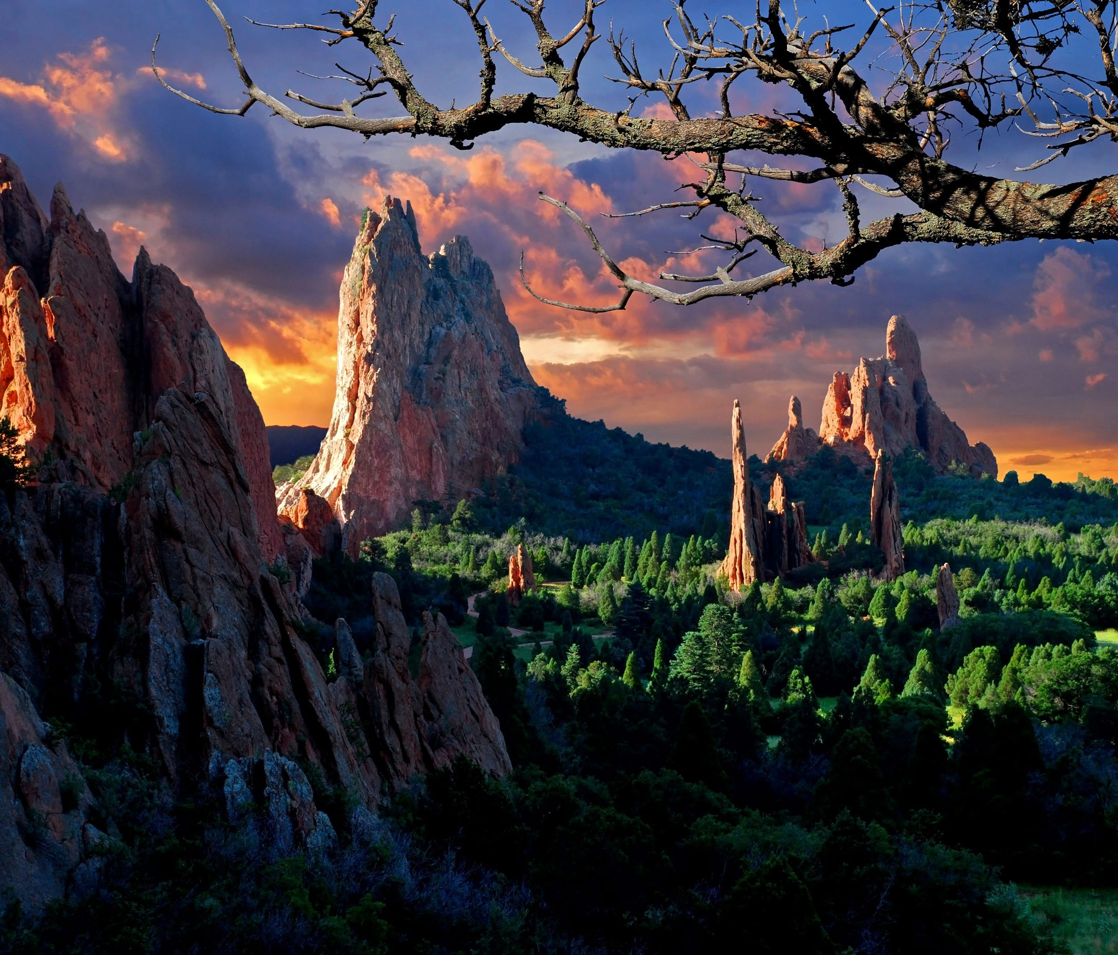 Some of the ancient, twisted juniper trees found within Garden of the Gods are more than 1,000 years old.
