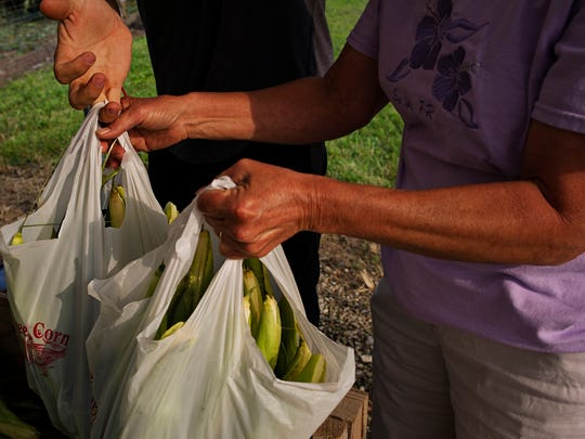 Customers pickup bags of fresh picked sweet corn at