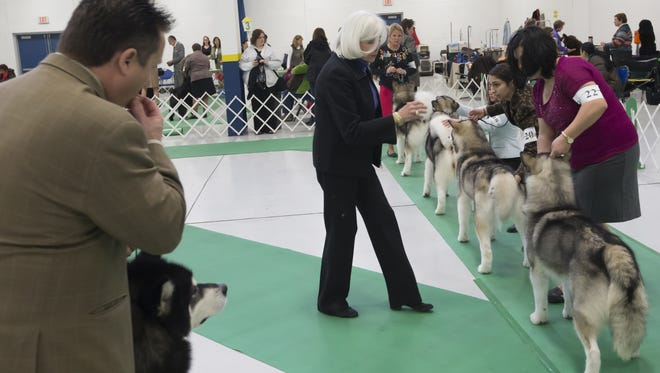 Dogs are judged on conformation in the show ring during the 75th All-Breed Winnegamie Dog Club Dog Show in January 2014 at the Sunnyview Expo Center in Oshkosh.