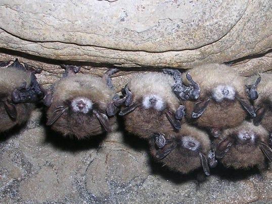 -bats.jpg_20080620