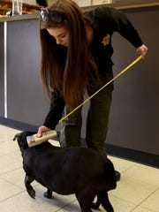 Licking County Animal Shelter Administrative Assistant