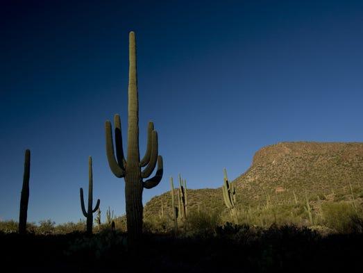 Saguaro National Park west of Tucson, AZ. Photo by