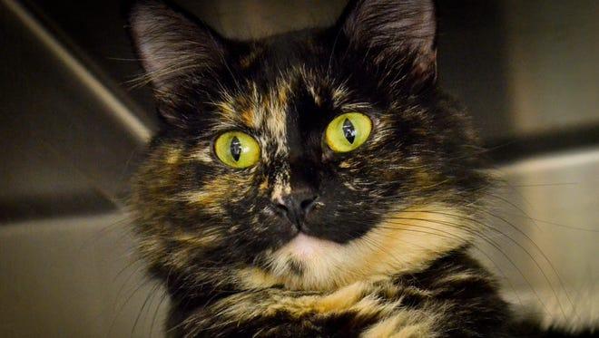 Rescue cat of the week: Regina Mills
