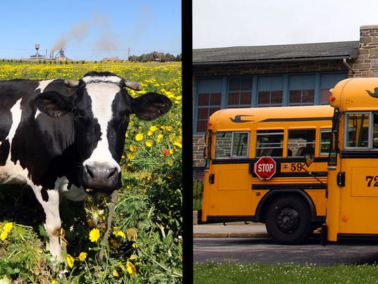 cow_bus