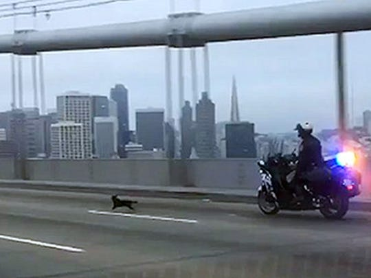 In this frame from video provided by the California