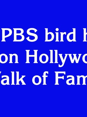 """$1600: """"This PBS bird has a star on Hollywood's Walk of Fame"""""""
