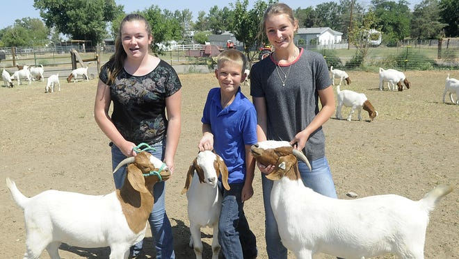 Siblings Aurora, Bodie and Emma Parsons will show Boer goats at the Lyon County Fair.