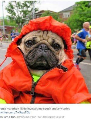 Doug the Pug made it out to the 2016 St. Jude Rock 'n' Roll Marathon.