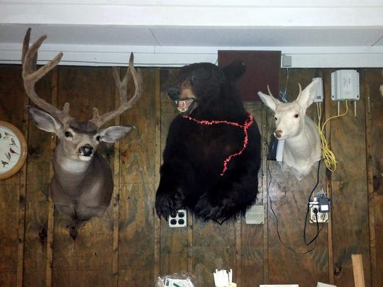 These are real hunting trophies, which adorn Durf's
