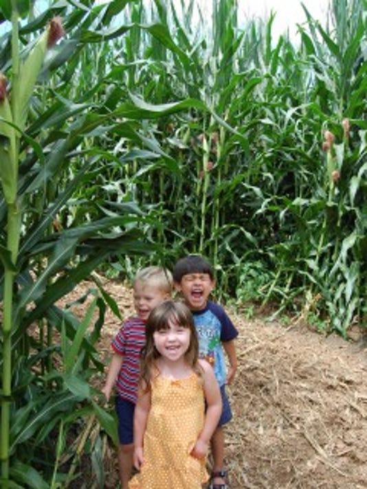 Eliada corn maze.jpg