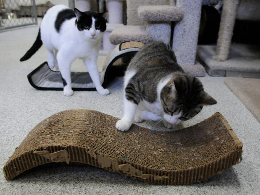 Ban on declawing cats?