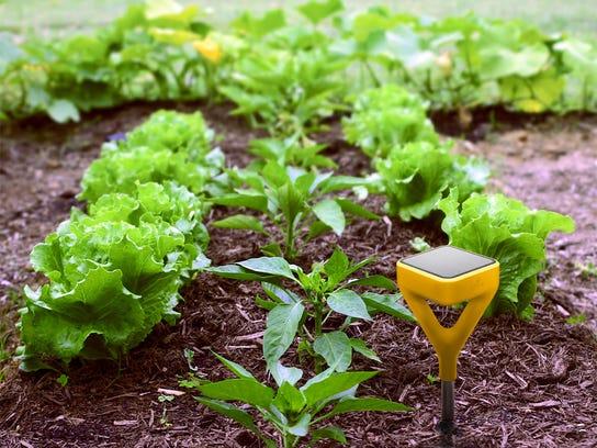 Edyn Garden Sensor