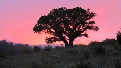 Photographer Matthew Midget captured the fading light and this solitary tree during a recent sunset.