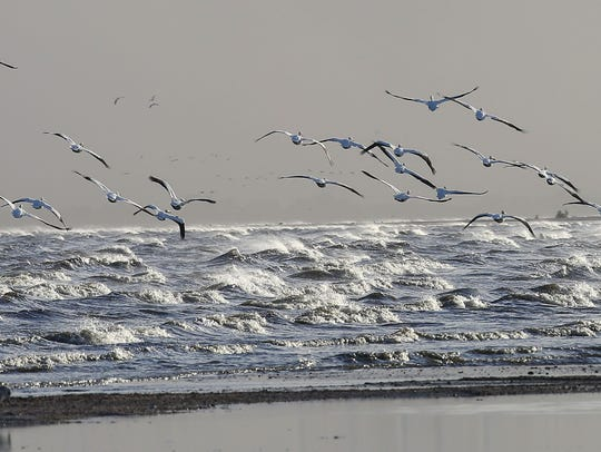 Pelicans fly over the Salton Sea on May 20, 2016.