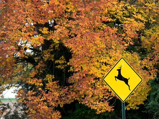 Fall Foliage In And Around Lebanon County 2016