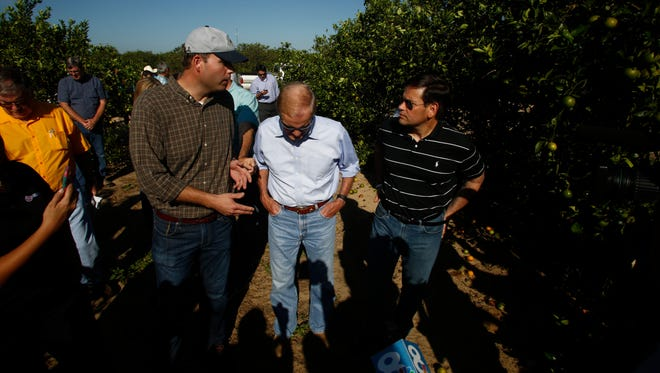 LAKE WALES, FL - SEPTEMBER 13: US Sens. Bill Nelson, center, and Marco Rubio, right, tour the Story Grove orange grove where large numbers of oranges sit on the ground in the wake of Hurricane Irma on September 13, 2017 in Lake Wales, Florida.(Photo by Brian Blanco/Getty Images) ORG XMIT: 775042414 ORIG FILE ID: 846598652