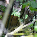 Dave Wolf: Deer hunting season is fast approaching