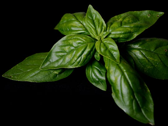 Basil from Ivy Creek Family Farm.