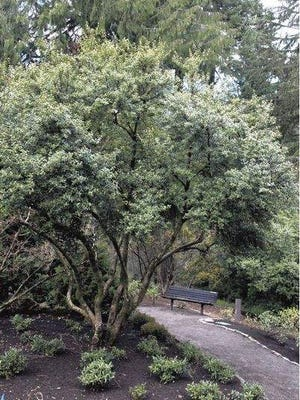 The Hoyt Arboretum has 12 miles of trails. The Hoyt Arboretum in Portland has 12 miles of trails.
