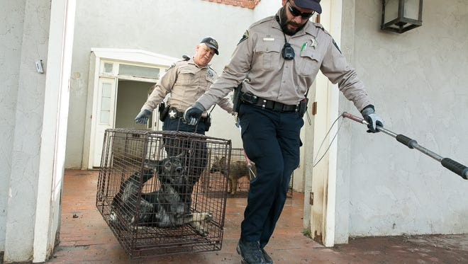 Doña Ana County Animal Control officers Kevin Apodaca, foreground, and Jim Snow remove a Czech Shepherd from a home located on Southwind Road.