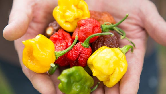 Troy Primeaux holds a variety of peppers grown in his