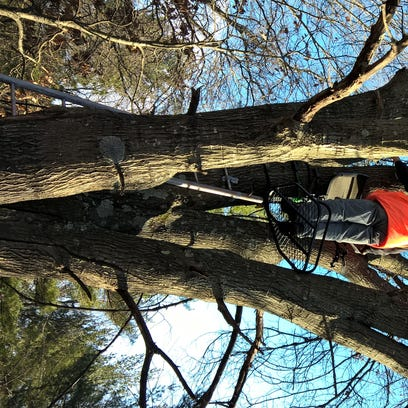 Tree stands account for majority of hunting accidents