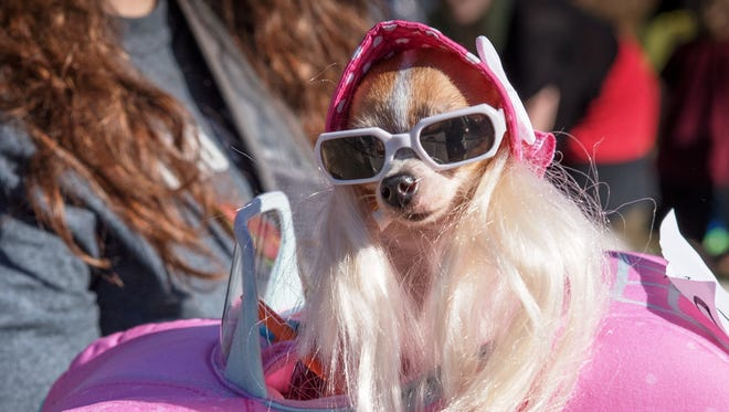 """""""Barbie"""" was one of the winners in the pet category last year."""