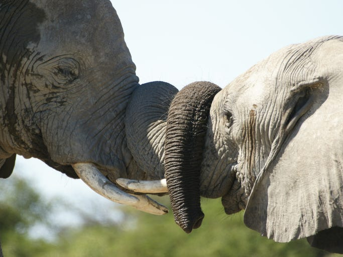 Etosha National Park in Namibia is a rare wildlife park that can easily be toured on your own.