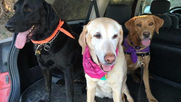 Faith, Butterfly and Toro get ready for a hike.