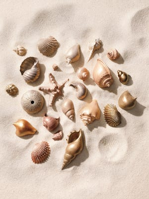 By the water's edge: As you relax at the beach, have fun collecting seashells to bring home.